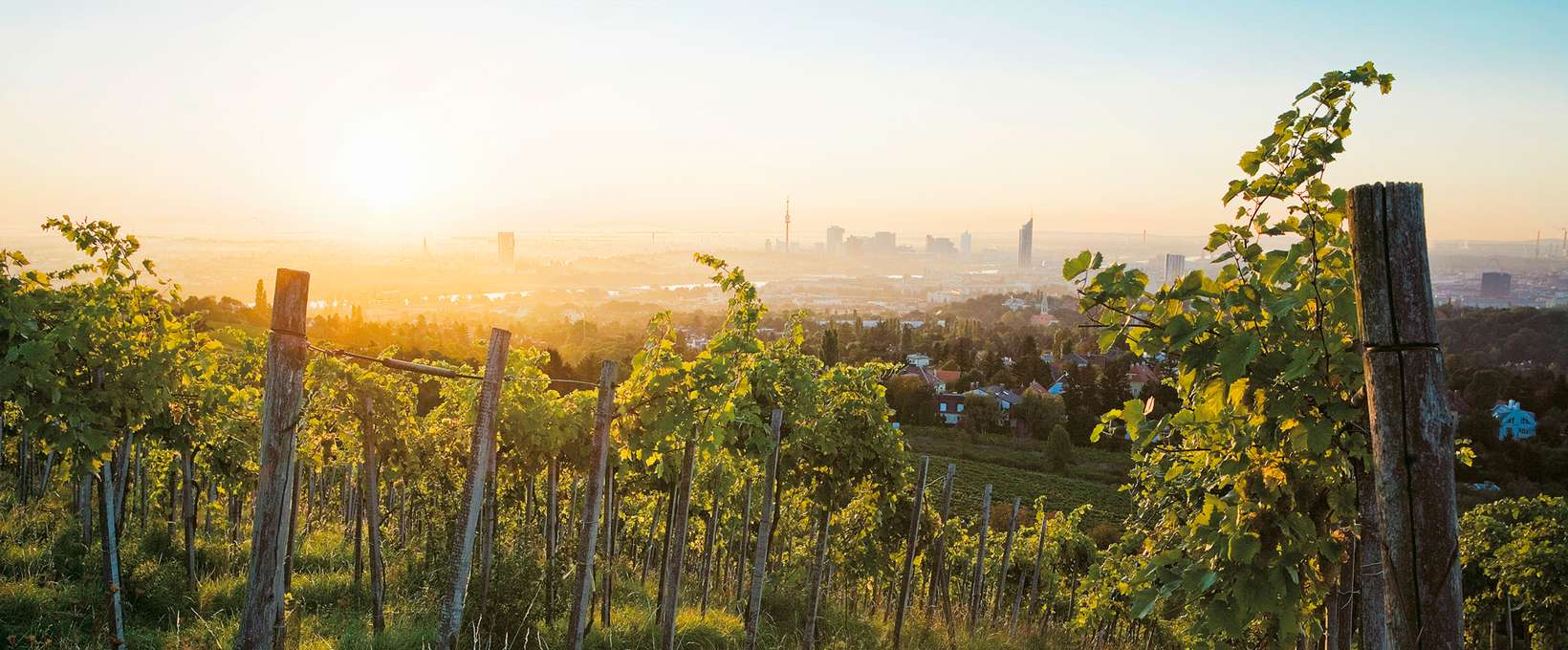 vineyard with view over the city | Vienna  | © WienTourismus | Lois Lammerhuber